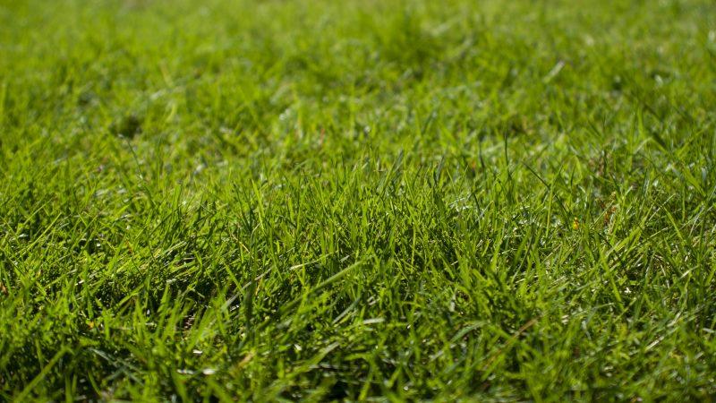 Een van de tuintrends van 2020: kunstgras