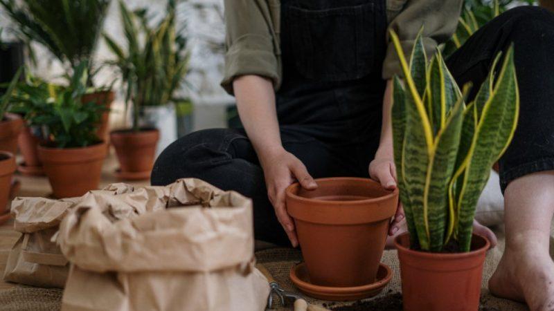 Tips om je tuin op te knappen