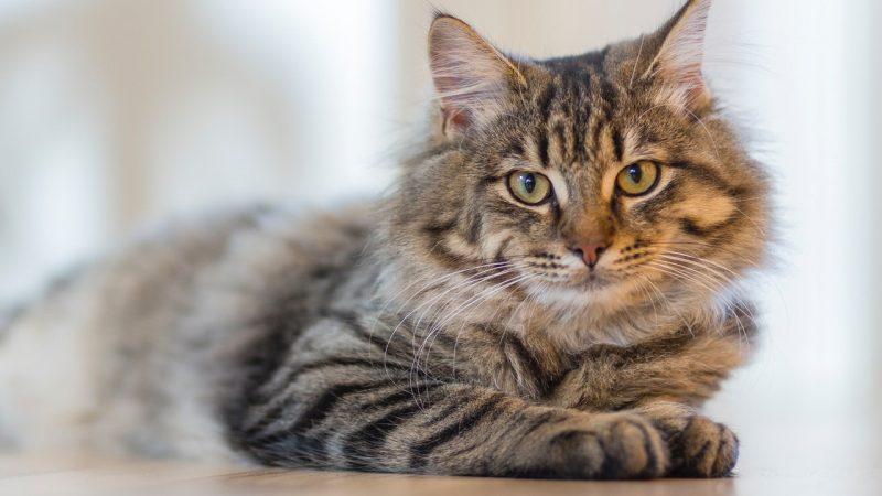 Kattenliefhebbers: welke kattenluik past bij jouw kat?